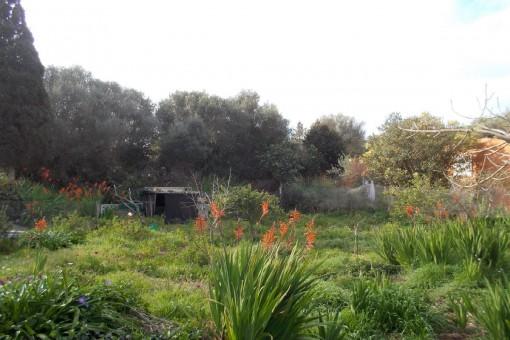 Schönes Baugrundstück in ruhiger Lage in Cala en Porter